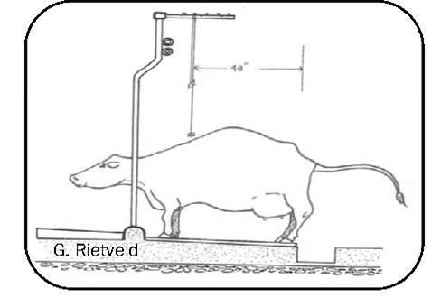 Figure 16 is a line drawing showing a side view of a cow standing in a tie stall and the location of the electric trainer suspended above her. The cow's back feet are near the gutter curb and her back is arched in a urinating posture. The horizontal location of the trainer is at the cow's chine, slightly ahead of the point where her back begins to arch.