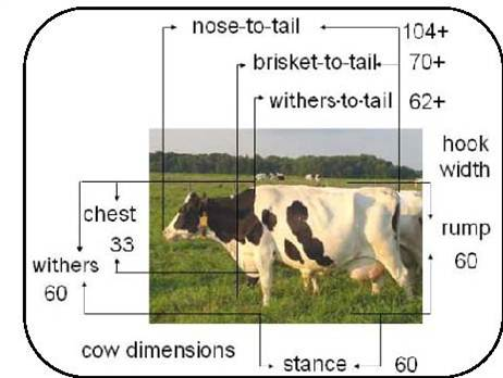 Figure 2 shows a left-facing side view of a Holstein cow standing outside in a pasture field. Several lines and measurements are overlaid on the photo to illustrate body dimensions that are useful for designing free stalls. Example measurements include nose-to-tail - 104 inches, withers and rump height - 60 inches, brisket-to-tail - 70 plus inches; stance (distance between front and back feet) 60 inches, and chest (distance between brisket and top line) - 33 inches.