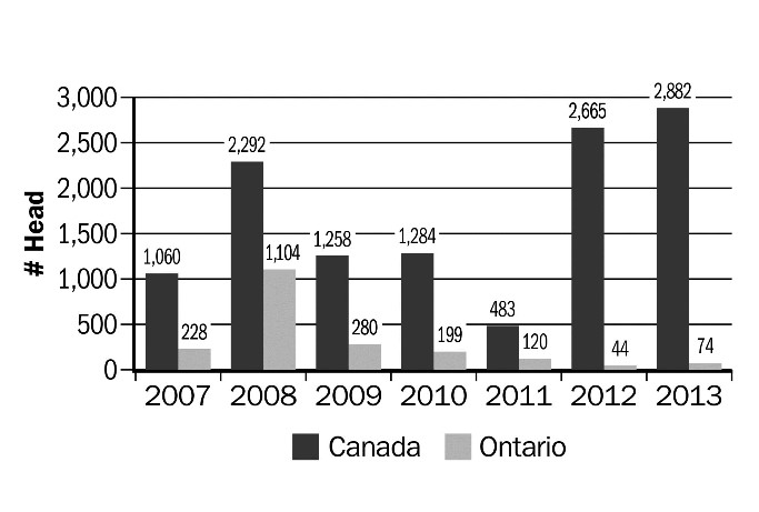 Figure 15. Number of live goat imports, 2007–2013. Source: Canadian International Merchandise Trade Database, Statistics Canada.