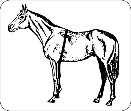 Estimating Body Weight for Horses