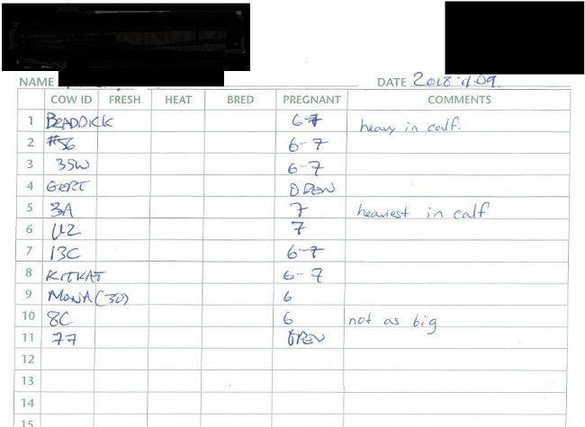 An Example of a Pregnancy Scanning Report in Beef