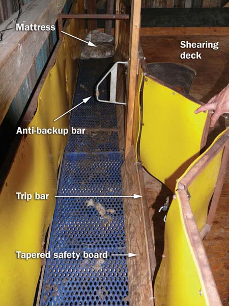 A trip bar and tapered safety board directs the sheep onto the shearing deck