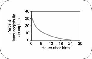 Graph shows that the ability of a calf to absorb immunoglobulins declines rapidly after birth.