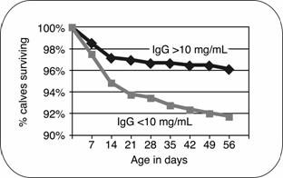 Figure 3 - Survival of calves with inadequate serum immunoglobulin concentrations is reduced, compared with calves having acceptable levels of immunity.  Source: National Dairy Heifer Evaluation Project, NAHMS, 1992