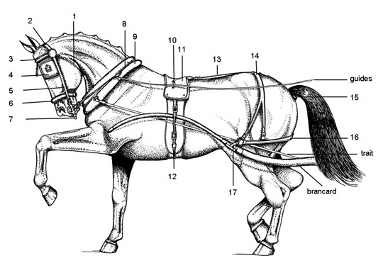 76807 horse besides Parts Of The Horse Driving Harness Leather moreover 128493395592480651 also Team Harness Parts moreover Info Lightharness. on horse carriage driving